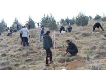 Tehran Branches of Congress60 Celebrated Arbour Day by Planting thousands of Trees